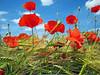Révérence (Excalibur67) Tags: flowers macro nature fleurs landscape paysage printemps frühling 10010 coth mywinners platinumheartaward coth5 passiondéclic