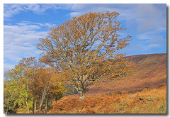 Golden Brown (Ross Forsyth - tigerfastimagery) Tags: autumn golden scotland browns loch arkaig