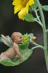 Kira and the Bumble Bee (lynne bernay-roman) Tags: baby girl wings happiness bee sparkle sunflower sweetheart aussiebaby