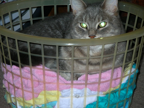 Dusty in basket