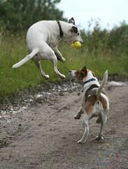 New camera Day 10 - Catch! (Mojo...) Tags: camera new dog macro canon ball eos rebel action sigma catch dslr soe dg 70300 xti 400d mojo74