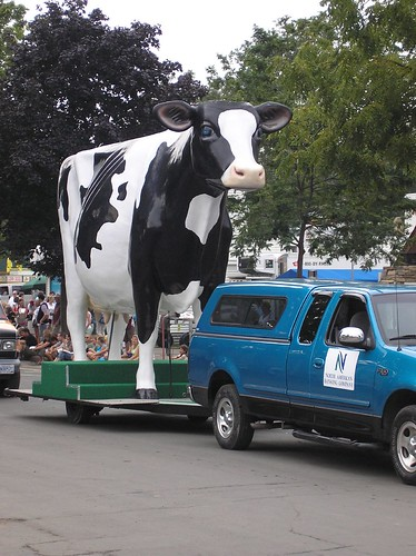 Big Holstein on Wheels
