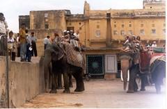 jaipur, india, blog la vuelta al mundo en 180 días, entrevista La vuelta al mundo en 180 días, vuelta al mundo, round the world, información viajes, consejos, fotos, guía, diario, excursiones