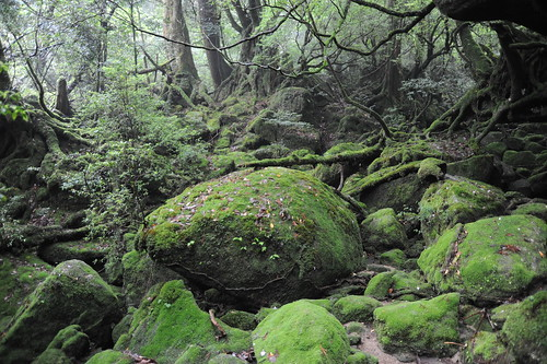 モノノケの森