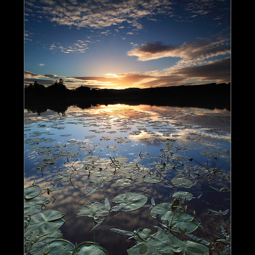 Lilly Pad Sunset