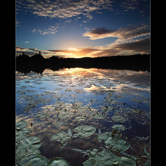 Lily Pad Sunset (angus clyne) Tags: blue sunset red sky cloud sun flower tree broken water pool forest dark island mackerel scotland leaf pond stem lily bright angus hill perthshire pad deep drop land shallow lillypad setting clyne mywinners colorphotoaward sunsetmania 100commentgroup