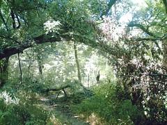 caddo trail, oak point park, plano, texas