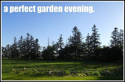Perfect Garden Evening