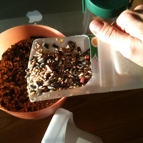 Bird feeder seed scoop blog post shot