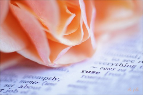 Rose / Dictionary | Flickr - Photo Sharing!