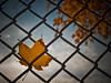 Trapped autumn (sjmgarnier) Tags: blue autumn usa tree yellow clouds season leaf newjersey trapped october mesh bluesky princeton baseballfield yellowleaf 2010 wirefence autumnleaf princetonuniversity newjerseyusa princetonnewjersey princetonuniversitynewjersey princetonuniversitybaseball princetonbaseballfield