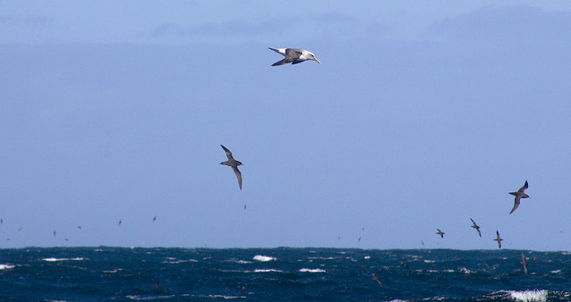 Hunting Birds at NZ Westcoast