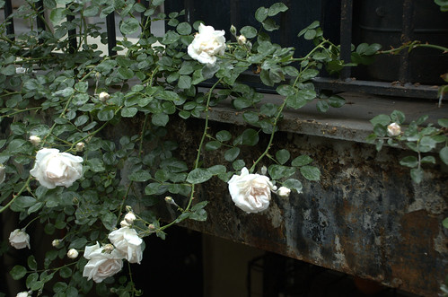 Roses and Beam, 222 Washington Avenue