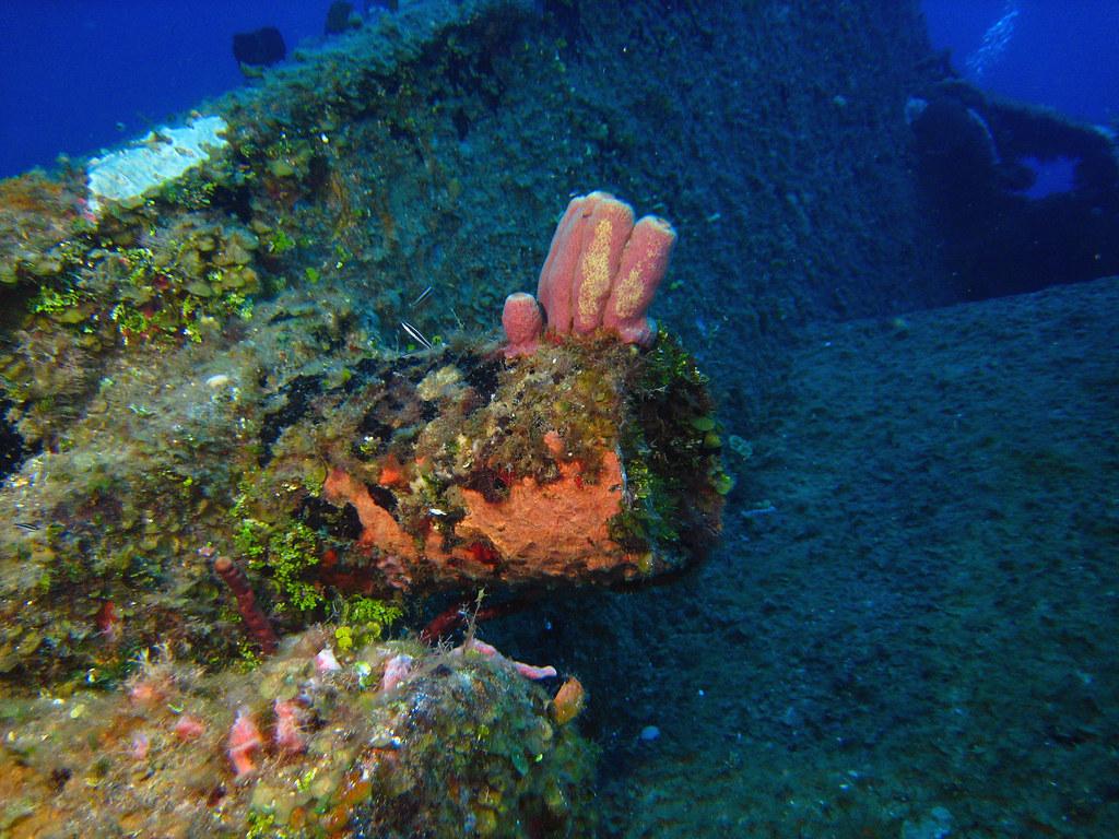 Sponge & Wrasse