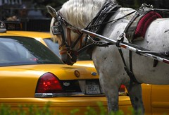 Rear View Suprise (riclane) Tags: nyc horse newyork centralpark cab taxi horseandcarriage 1on1photooftheday superbmasterpiece 1on1photoofthedayjuly2007