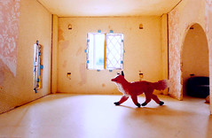 fox (mohawk) Tags: door old light copyright sunlight scale window glass liverpool paper doll peeling photographer shadows arte kunst painted small sean tiny 1950s fox mohawk 2009 08 wirral magie magia complicated dollshouse     limbert mgica magisch