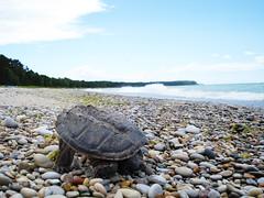 Turtle Yoga - by farlane