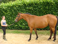 DSC00189 (jacaranda4) Tags: horse cheval mare du concours colt stallion francais chevaux filly selle foal cso poulain dressage jument coty complet elevage