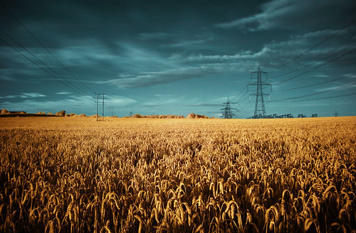 telegraphs & wheatfield