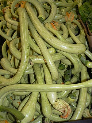 courgettes trompette.jpg