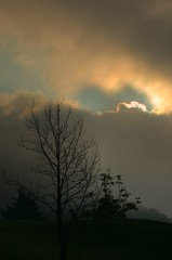 Foggy morning (christianmeichtry) Tags: morning sun tree fog clouds hdr photooftheday tatz supershot superbmasterpiece alptatz 10sep2007