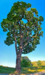 Livets tre? (Oddne Rasmussen) Tags: life tree oslo norway norge akershus tre fortress festning hdr livets