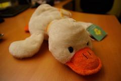 Ducksie