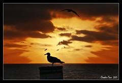 Sunset Blast (mac_raw) Tags: california sunset color bird bravo searchthebest welcomeback bff redondobeach thegallery beijinhos supershot magicdonkey xoxoxoxoxoxoxo mywinner abigfave artlibre shieldofexcellence superaplus aplusphoto flickrhearts magicdonkey25 ultimateshot flickrplatinum supercookie holidaysvancanzeurlaub superbmasterpiece goldenphotographer bratanesque searchandreward macraw nitenitexxxxx ultimatecookie cookieliciousimage cookieisthebest cookieisthecutest exploreprincess hitandrun~xo sweetdreamsdeargirlfriend specialcookie luvyoumore
