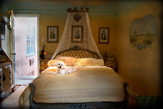dog photoshop lava bed guestbedroom shabbychic interiordecorating notmyhouse bichonfrisee fancyhouse lightingeffectflashlight