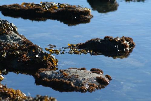 Tide Pools - Crescent City