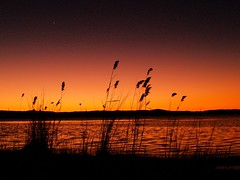 First star (maureen_g) Tags: sunset sky colour nature beauty silhouette clouds australia nsw soe questfortherest blueribbonwinner longjetty shieldofexcellence impressedbeauty superaplus aplusphoto thatsbostin