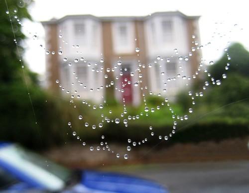 IMG_1027_spiders web in rain