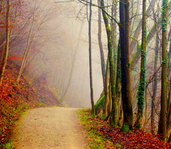 Over the hill (aremac) Tags: fog forest schweiz switzerland suisse path schaffhausen naturesfinest mywinners