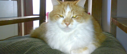 Oscar Is Seriously Comfy