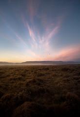 In Iceland's back-yard, 01:50 AM (Sindri Jóelsson) Tags: summer sky sun nature birds fog night clouds iceland warm midnight nightlight artic tundra ísland midnightsun nesting terns trailing sindrijóelsson