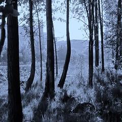 Petit matin brumeux (Lara-queen) Tags: nature fog sunrise river spring magog riviere printemps petitmatin brume 2010 estrie quynhvu canonpwershotsx10is laraqueen laraaaqueen
