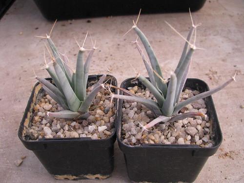 some of my seedlings 4702438919_6ed8aa7171