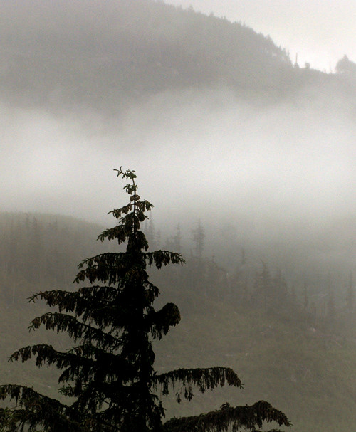 fog on Kasaan Mountain, Kasaan, Alaska