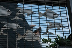 Here, fishy, fishy, fishy! (roobarb!) Tags: uk fish salfordquays dolphins grille salford lowry thelowry lowrytheatre