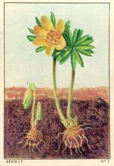 feuilles 3