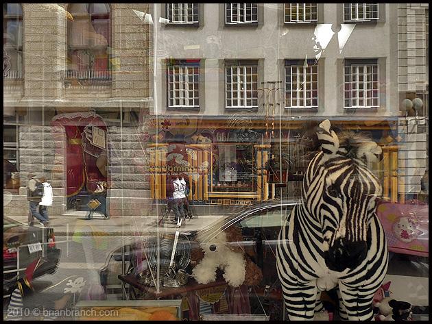 P1090721_zebra_quebec