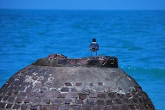 """I wonder how far it is to the other side?"" (canikon1998) Tags: ocean history beach stpetersburg island ruins tampabay florida seagull gull historic powerplant saintpetersburg westcoast fortdesoto nationalwildliferefuge spanishamericanwar egmontkey fortdade"