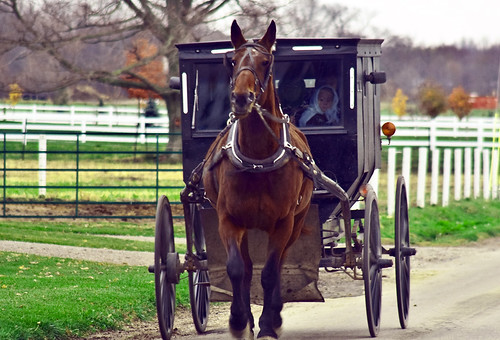 Amish buggy and cart