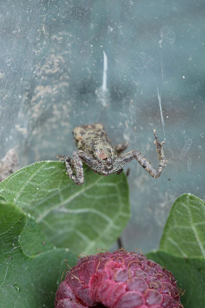 froggy bottom