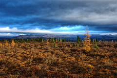 A First View (kdee64) Tags: autumn landscape september limestone chiaroscuro stormcloud tundra arcticcircle eagleplains tamarack taiga dolomite dempsterhighway richardsonmountains northernyukon uniquelight larixlarcina
