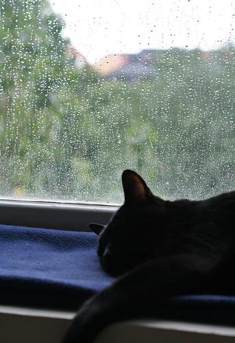 Sleep on a Rainy Day