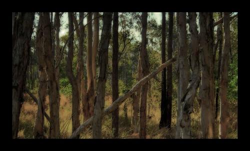 Paperbark Grove