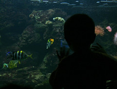u've been watched (Moonna) Tags: fish zoo watch acquarium