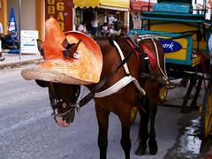 Orange Hat Donkey (kkelly2007) Tags: orange hat mexico donkey cozumel cart firsttheearth
