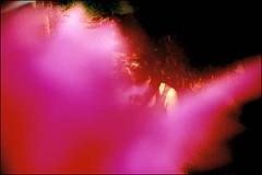soft pink wind (Twiggy Tu) Tags: life film me summertime twiggy lcalomo photobyfiona taipeitaiwan ilovepeachcolor
